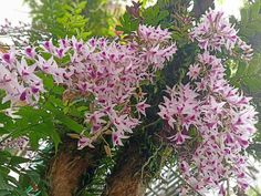 Dendrobium Orchids, Plants, Plant, Planets