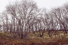 Westhoek natuurreservaat De Panne