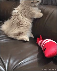 KITTEN GIF • When suddenly your cute Kitty becomes a killer, wildly bunny kicking his toy!