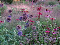 Signature planting: Piet Oudolf (list of projects) - Echinops bannaticus, Echinacea purpurea, Allium Summer Beauty