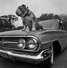 Hood Ornament -- photo by David Bouchant