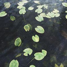 213 følgere, 184 følger, 21 innlegg – Se Instagram-bilder og -videoer fra Annette Elvira (@annetteelvira) Plant Leaves, Plants, Painting, Instagram, Art, Art Background, Painting Art, Kunst, Paintings