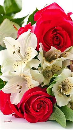 A beautiful photo you feel with your heart — lapochocha: Bellas flores… Happy Flowers, Tulips Flowers, All Flowers, Planting Flowers, Rose Flower Photos, Love Rose Flower, Very Beautiful Flowers, Amazing Flowers, 12 Roses