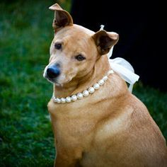 7 Ways to Dress Your Wedding Dog   TheKnot.com