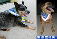 Here is a great twist on a dog bandana--complete with reflective strip for safety!