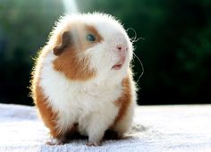 I love the ray of light and that cute little mouth!  Pondus by ~AndySimmons on deviantART