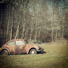 Old bug beautiful