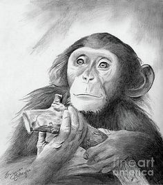 Pondering Chimpanzee Print By Suzanne Schaefer fame, glori, drawingpencil draw, pencil sketch, pencil art, graphit pencil