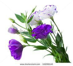Flowear Photos et images de stock | Shutterstock