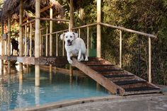 Paradise Ranch Pet Resort | Cage-Free Dog Boarding in Los Angeles, Doggie Day Care, Dog Training, Waterpark for Dogs..... so where is our resort like this here....??
