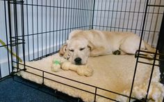 The dog crate can be a useful tool when training a new puppy or adult dog. Used correctly, the crate cane be a place of sanctuary and security when needed.
