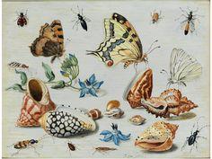 † Jan van Kessel I, um 1626 – 1679 - Hampel Fine Art Auctions Botanical Drawings, Botanical Illustration, Botanical Prints, Illustration Art, Salvador Dali, Renaissance, Shell Game, Thing 1, Insect Art