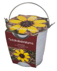 Pflanzset+in+Zinkeimer,+Schokoladenblume+-+Schokoladenblume+-+Bei+starkem+Sonnenschein+duftet+die+Blume+kräftig+nach+Vollmilchschokolade.+Ihre+leuchtend+gelben+Blüten+werden+gerne+von+Bienen,+Hummeln
