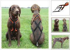 Sled-dog-harness-L-60-70lbs-perfect-for-dog-sledding-canicross-or-skijoring