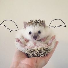 Meet the most adorable little vampire hedgehog