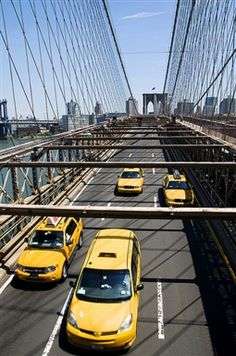 The Buzzing Big Apple picture in New York City