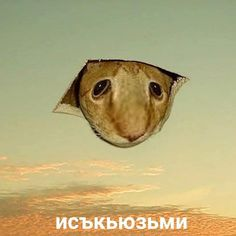 Stupid Cat, Stupid Funny Memes, Funny Relatable Memes, Russian Cat, Russian Memes, Reaction Pictures, Funny Pictures, Hello Memes, Funny Mems
