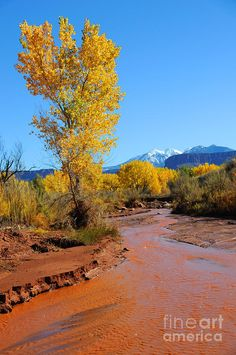 ✮ Desert Stream in Fall with Snowy Mountains