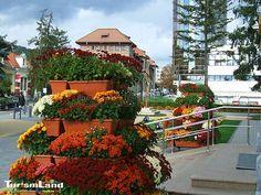 ro – Fii turist in Romania Romania, Happy Halloween, City, Plants, Cities, Planters, Plant, Planting