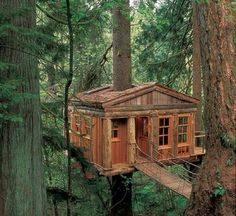 Really nice tree house