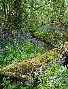 Forest Garden, Woodland Garden, Garden In The Woods, Walk In The Woods, Backyard Landscaping, Wooded Backyard Landscape, Natural Landscaping, Thing 1, Dream Garden