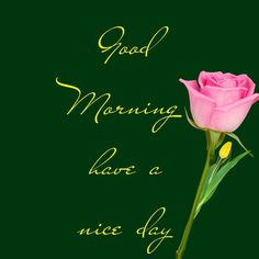 Good Morning Wishes Quotes, Good Morning Msg, Special Good Morning, Morning Blessings, Good Morning Photos, Good Morning Sunshine, Good Morning Messages, Good Morning Everyone, Morning Status