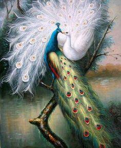 Love peacocks