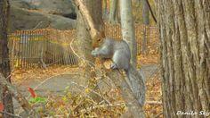 Squirrel. NYC. USA