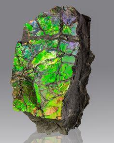 Ammolite. Canada / Mineral Friends <3