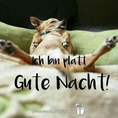 Good night pictures For friends 6 - Trend Shenanigans Quotes 2019 Pictures For Friends, Night Pictures, Good Night, Good Morning, Funny Babies, Cute Babies, German Quotes, Night Wishes, Night Quotes