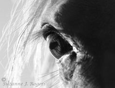 black white photography of angals | Black and White Horse photography | awindowintothewoods
