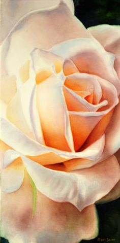 """White Rose on Canvas, 12""""x24"""" - Watercolor by Doris Joa"""