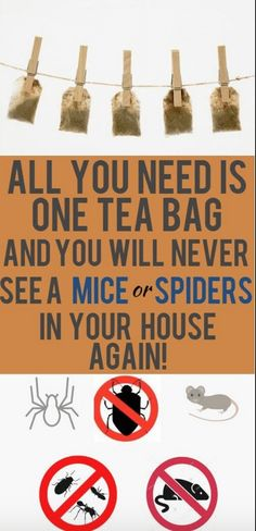One Tea Bag And You Will Never See A Mice Or Spiders In Your House Again! (Works great) - PowerfulRemedy Mice and spider infestations are problems that are bothering thousands of households around the globe. A huge number of homeowners House Cleaning Tips, Cleaning Hacks, Diy Hacks, Get Rid Of Spiders, Keep Spiders Away, Keep Mice Away, Getting Rid Of Mice, Peppermint Tea, Ideias Diy