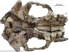 Fonte: Arquivos do Insólito: Ufologia, Criptozoologia, Fenômenos Anômalos: Cientistas encontram fóssil de lontra com mais de 6 milhões de anos