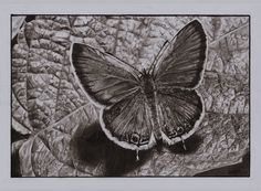 Butterfly on Leaf Drawing