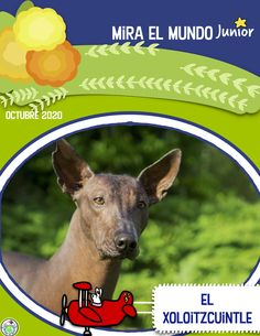 Our Octubre 2020 issue features el Xoloitzcuintle, sacred dog of the Aztecs and one of three Mexican breeds. Along with the printable magazine comes activity pages, a game, word wall cards, links to authentic resources online and more! Mundo de Pepita, Resources for Teaching Languages to Children #elementaryspanish #spanishforkids #xoloitzcuintle Teaching French, Teaching Spanish, Spanish Teacher, Spanish Lesson Plans, Spanish Lessons, Elementary Spanish, Elementary Schools, Spanish Speaking Countries, Six Month