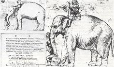 OK. Pope Leo X buried his pet elephant under the Vatican