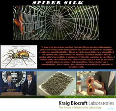 These protein based fibers, exemplified by spider silk, have been the subject of much interest due to spider silk's incredible toughness.