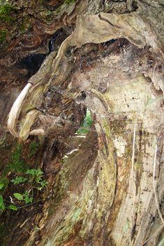 Alter Baum am Bach