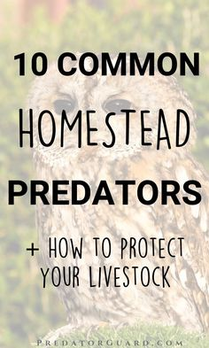 10 Common Homestead Predators - And What You Can Do About Them - Predator Guard - Predator Deterrents and Repellents Raising Farm Animals, Raising Goats, Skunk Repellent, Getting Rid Of Raccoons, Wild Animals Attack, Meat Rabbits, Raising Backyard Chickens, Living Off The Land, Chicken Breeds