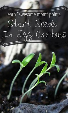 How to start vegetable seeds in egg cartons