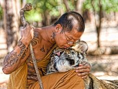 Buddhist monk and tiger. Read about Tiger Temple in this post Tiger Temple, Amor Animal, Buddhist Monk, Buddhist Temple, Tier Fotos, Big Cats, Beautiful Creatures, Animal Kingdom, Muay Thai