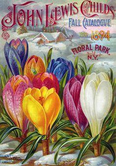Heirloom Crocus on 1894 Catalog Cover | Old House Gardens