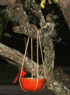 Pumpkin Bird Feeder - May Arts Wholesale Ribbon Company