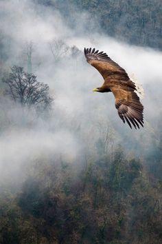 "plasmatics-life: "" Eagles Dare ~ By Ian David Soar "" The Eagles, Photo Aigle, Beautiful Birds, Animals Beautiful, Aigle Animal, Nature Sauvage, Mundo Animal, Birds Of Prey, Flying Birds"