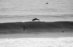 Dolphins + Surfing - Torrey Pines/Blacks Beach, San Diego, CA by Laurent Chantegros
