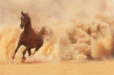 """""""When Allah willed to create the horse, he said to the south wind: """"'I will that a creature should proceed from thee condense thyself!' and the wind condensed itself. Then came the angel Gabriel, and he took a handful of this matter and presented it to Allah, who formed of it a dark bay or a dark chestnut horse (koummite- red mingled with black), saying: ..."""