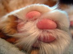 Cat feet make me happy, not sure why, but they do.