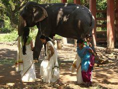 elefanten center punnathur kotta