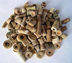 Crinoid Fossil Pieces {in Specimen Jar} by BarrenRiverEmporium